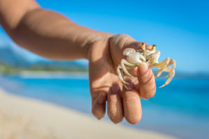 Photo of a crab: things to do in Kill Devil Hills